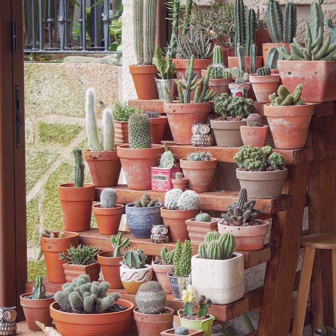 Diy Succulent Potting Mix Australia: ���ูรูปภาพ Instagram ���ี้จาก @motherofcrasas €� ���ูกใจ 4,357 ���น
