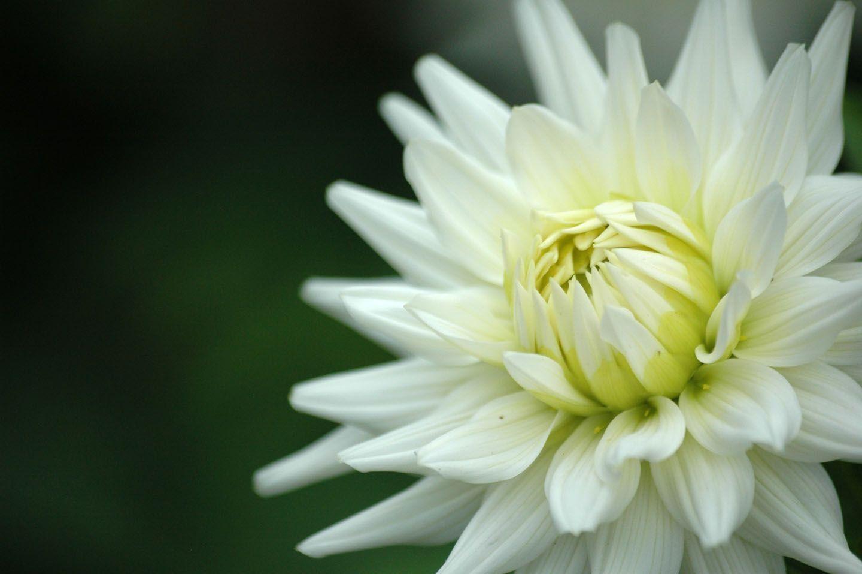 White flower white flower wallpaper flowers u bouquet pinterest