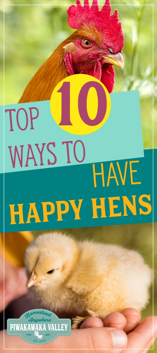 10 Top Tips On How To Make Chickens Happy: Have Happier ...