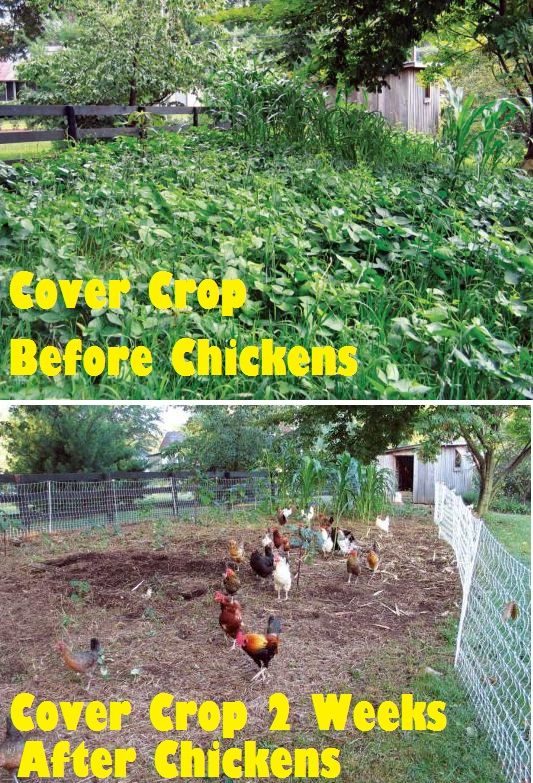 Grow cover crops for the best garden soil garden - Cover crops for vegetable gardens ...