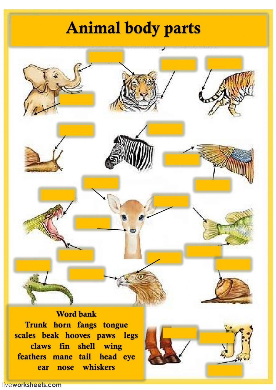Pin on inglés animales
