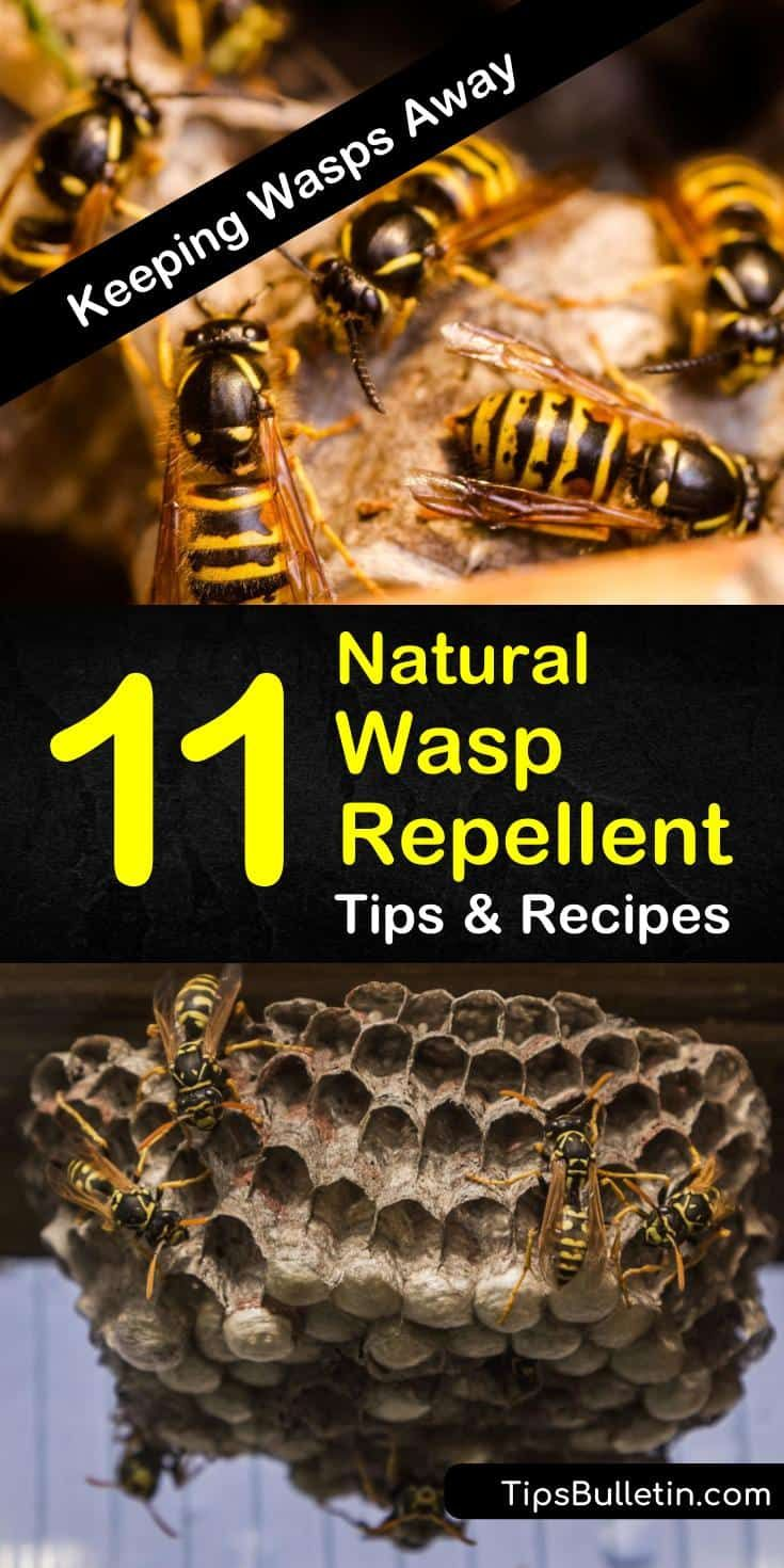 how to deter wasps from patio