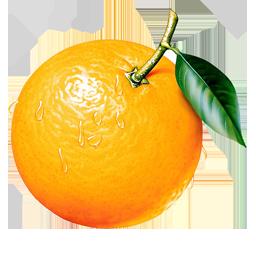 Orange Png Image Free Download Fruit Painting Fruit Art Fruit Photography