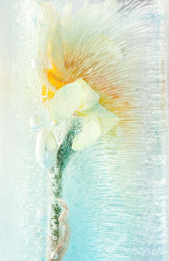 Soft PaperWhite Flower Photography Fine Art Print on WaterColor ...