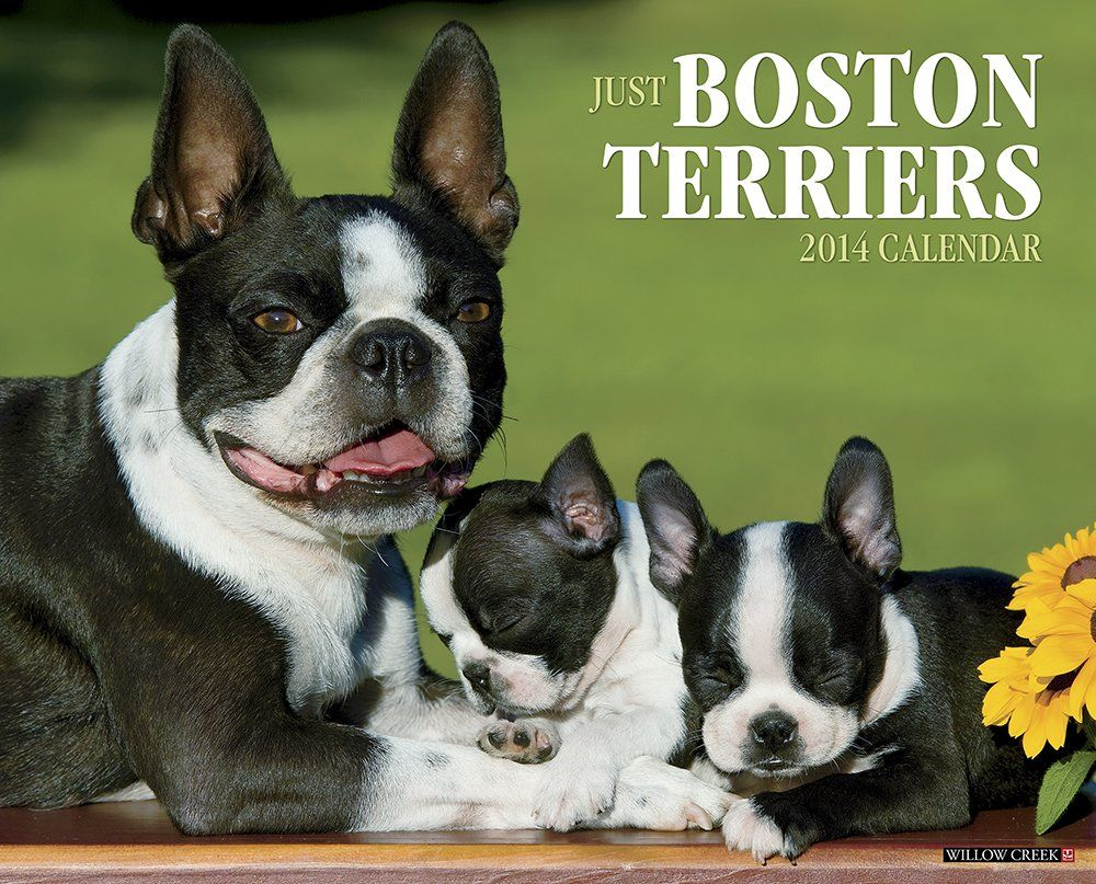 Boston Terrier Calendars Boston Terrier Boston Terrier Love Terrier