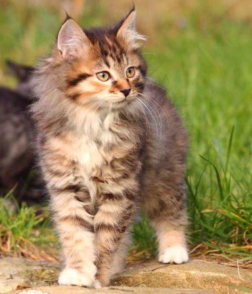 Elsi A Little Older Cat Care Warrior Cats Beautiful Kittens