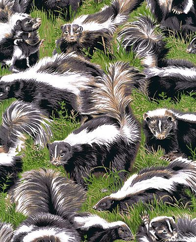 Captivating Backyard Bandits   Sneaky Skunks