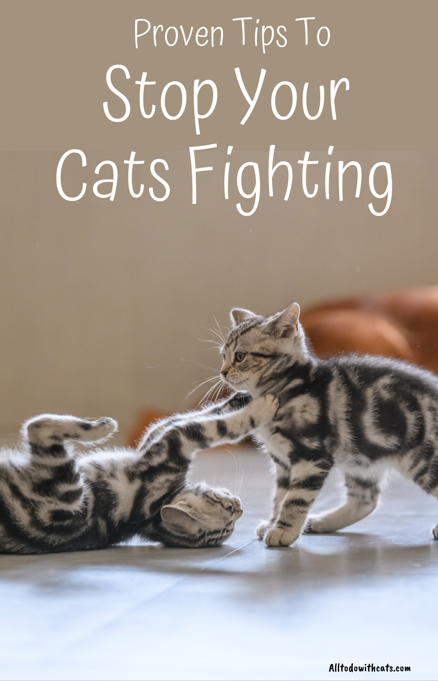 How To Stop Your Cats From Fighting Each Other In 2020 Introducing A New Cat Cats Cat Illnesses
