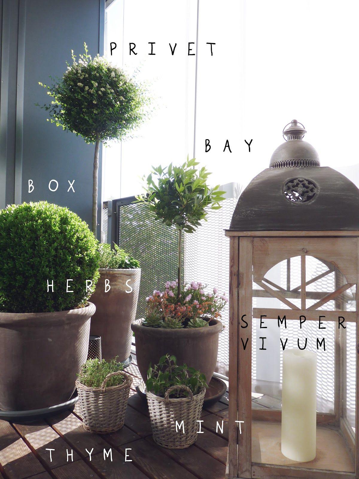 BIMH my balcony privet bay box herbs