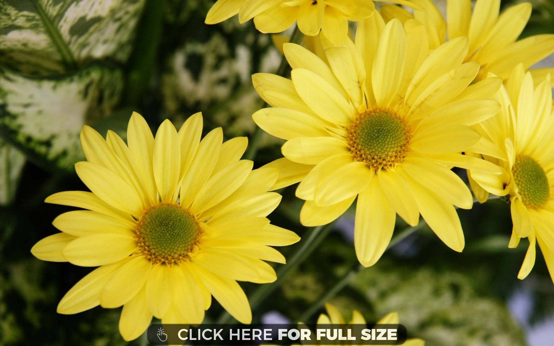 Yellow Color Flowers 28549 Desktop Wallpapers Pinterest