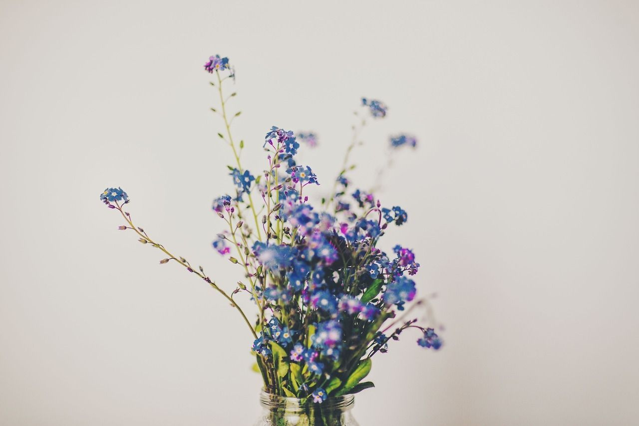 #photographers #noviceatplay #birthday #artists #flower #meolog #source #tumblr #happy #angie #dear #onHappy birthday, dear Angie @novice-at-play :) -Happy birthday, dear Angie @novice-at-play :) -