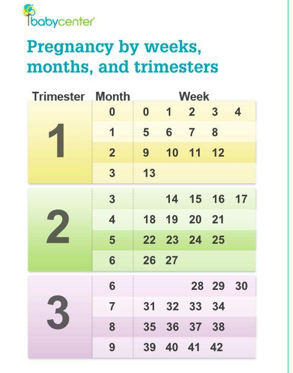 6 Months Is How Many Weeks In Pregnancy : months, weeks, pregnancy, Happens
