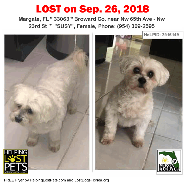 Lost Dog Help Susy Get Home She Is A Senior White Female Maltese