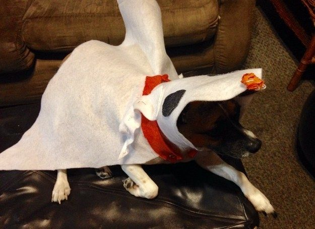 This Zero From The Nightmare Before Christmas Dog Halloween