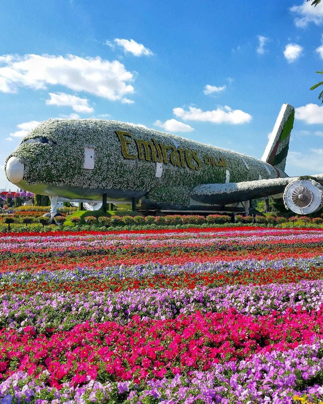 Dubai Miracle Garden, UAE, United Arab Emirates, flower