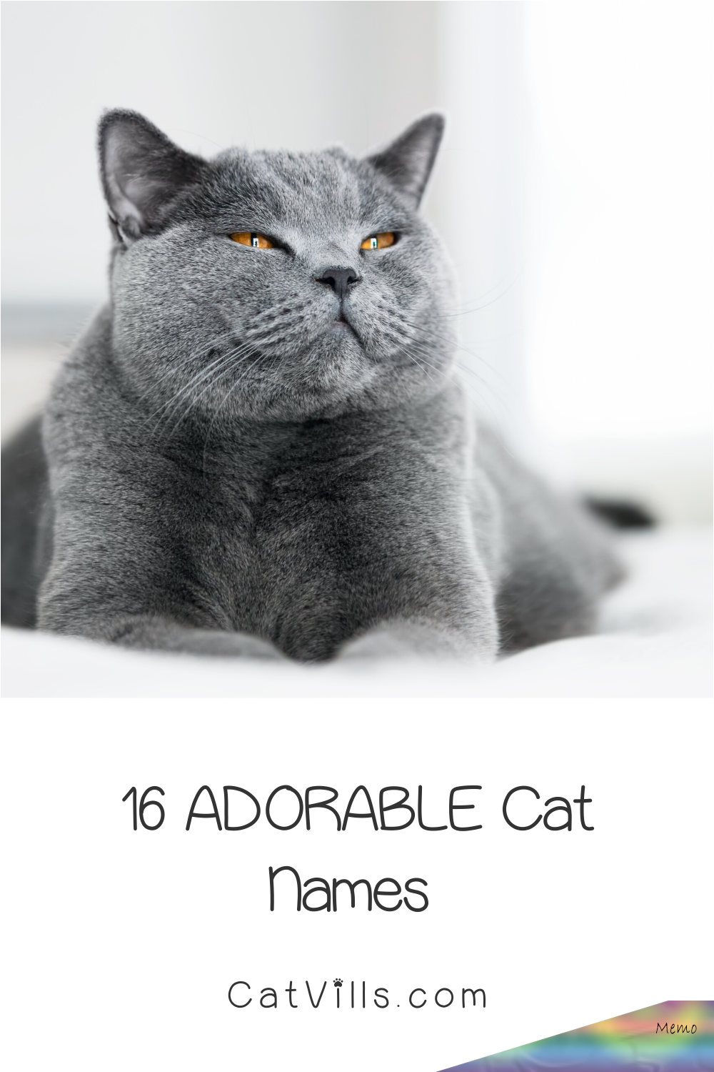 Looking for the perfect grey kitten names for your new