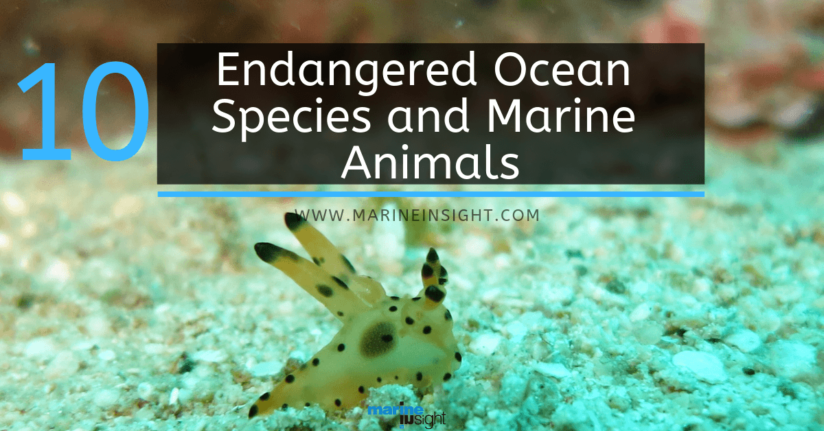 10 Endangered Ocean Species and Marine Animals Ocean