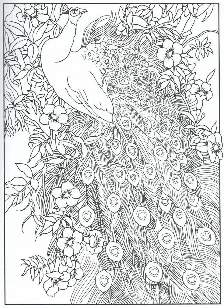 98a0e708bf9575ffd9fd9be840dcdda9.jpg (736×1010) | Peacock ...