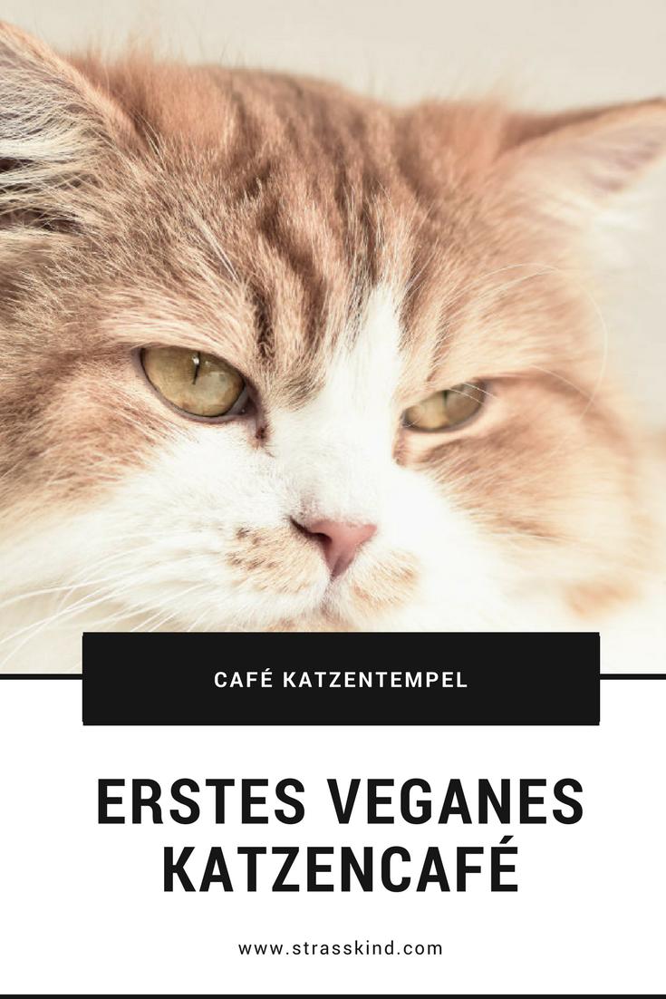 Katzenkaffee Deutschland