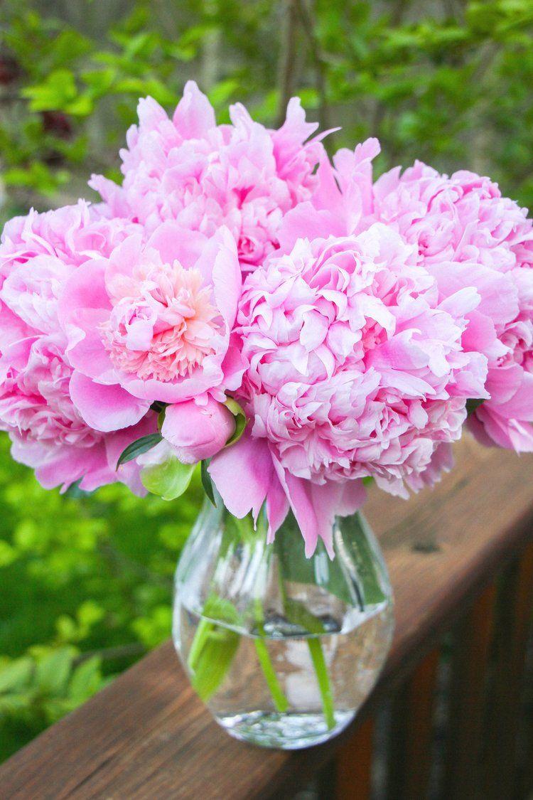 Peony Season (With images) | Peonies season, Peonies, Flowers