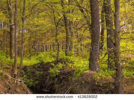 Spring wood. Early spring. The wood wakens after a dream. Young fresh greens of foliage. Wildlife. Photo wall-paper, card