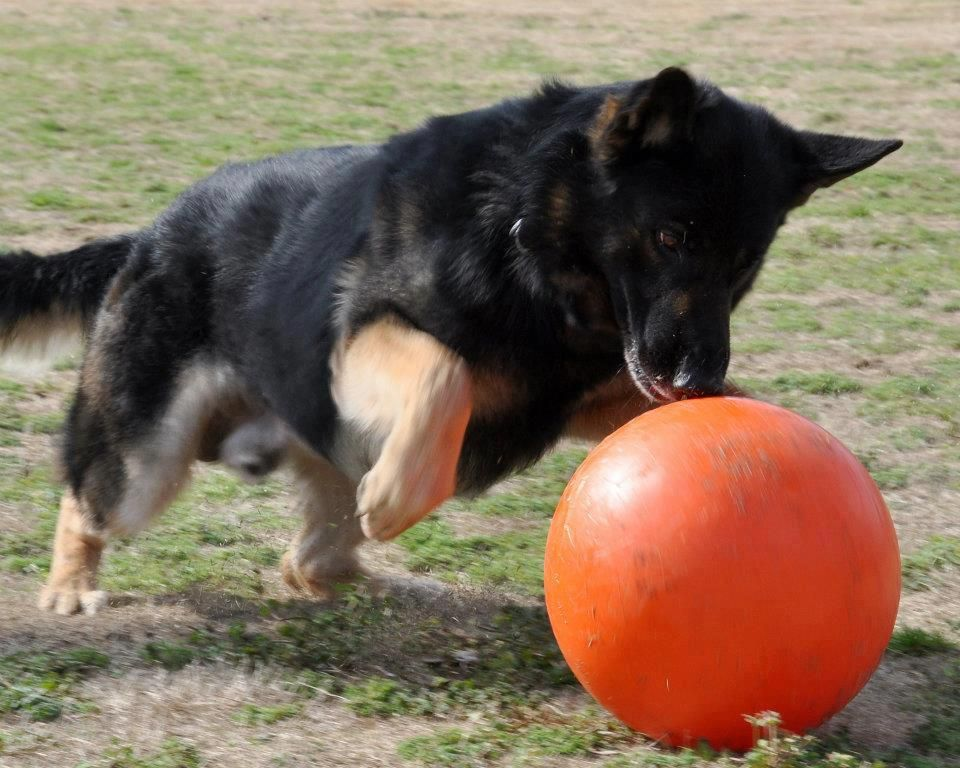 Image result for durable dog toys