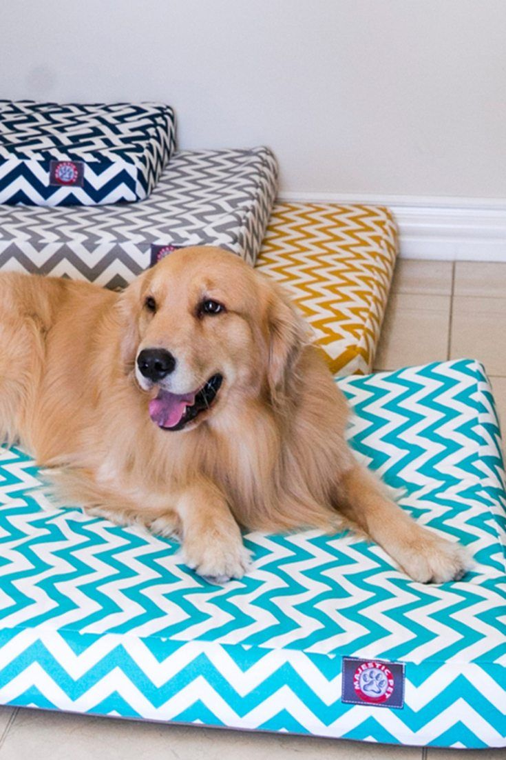 5 Steps to Clean A Large Dog Bed Dog bed
