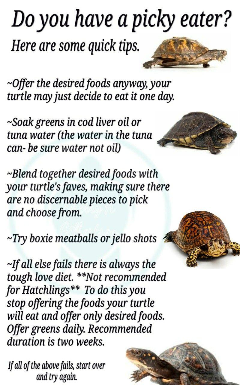 Pin by Big Tortoise on Tortoise Diet   Aquatic turtles ...