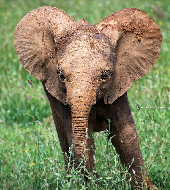 Ele Fun Animals Elephant Photography Cute Animals