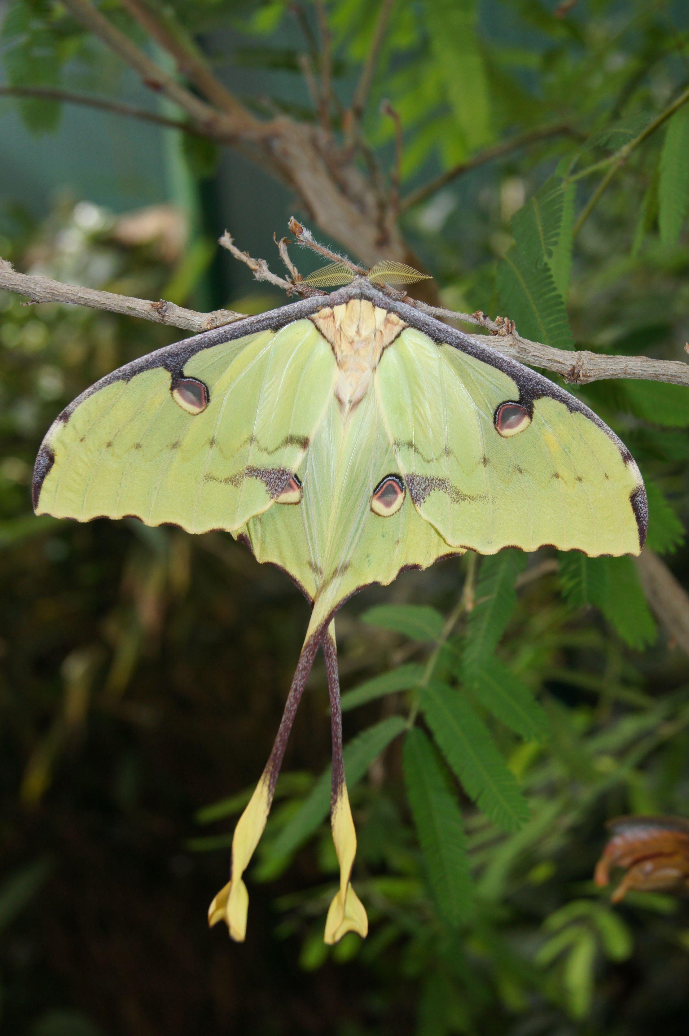 vlinder in vlindertuin gemert