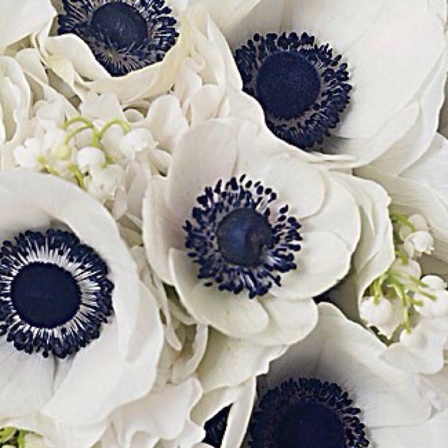 Nautical Wedding Ideas Part 1 Beautiful Flowers Wedding Flowers Anemone Wedding