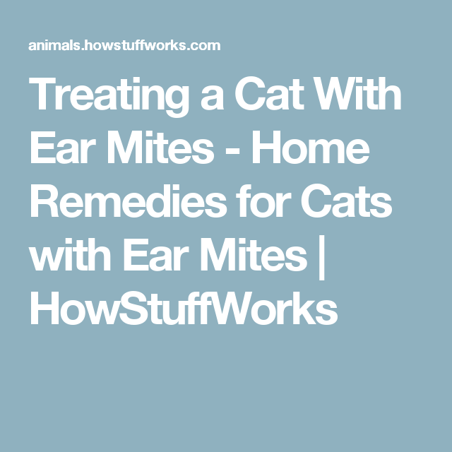 Home Remedies For Cats With Ear Mites Home Remedies Home Remedies For Diarrhea Cat Diarrhea