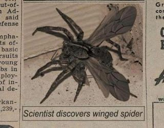 Scientists discover flying spider.   The Daily Carrier