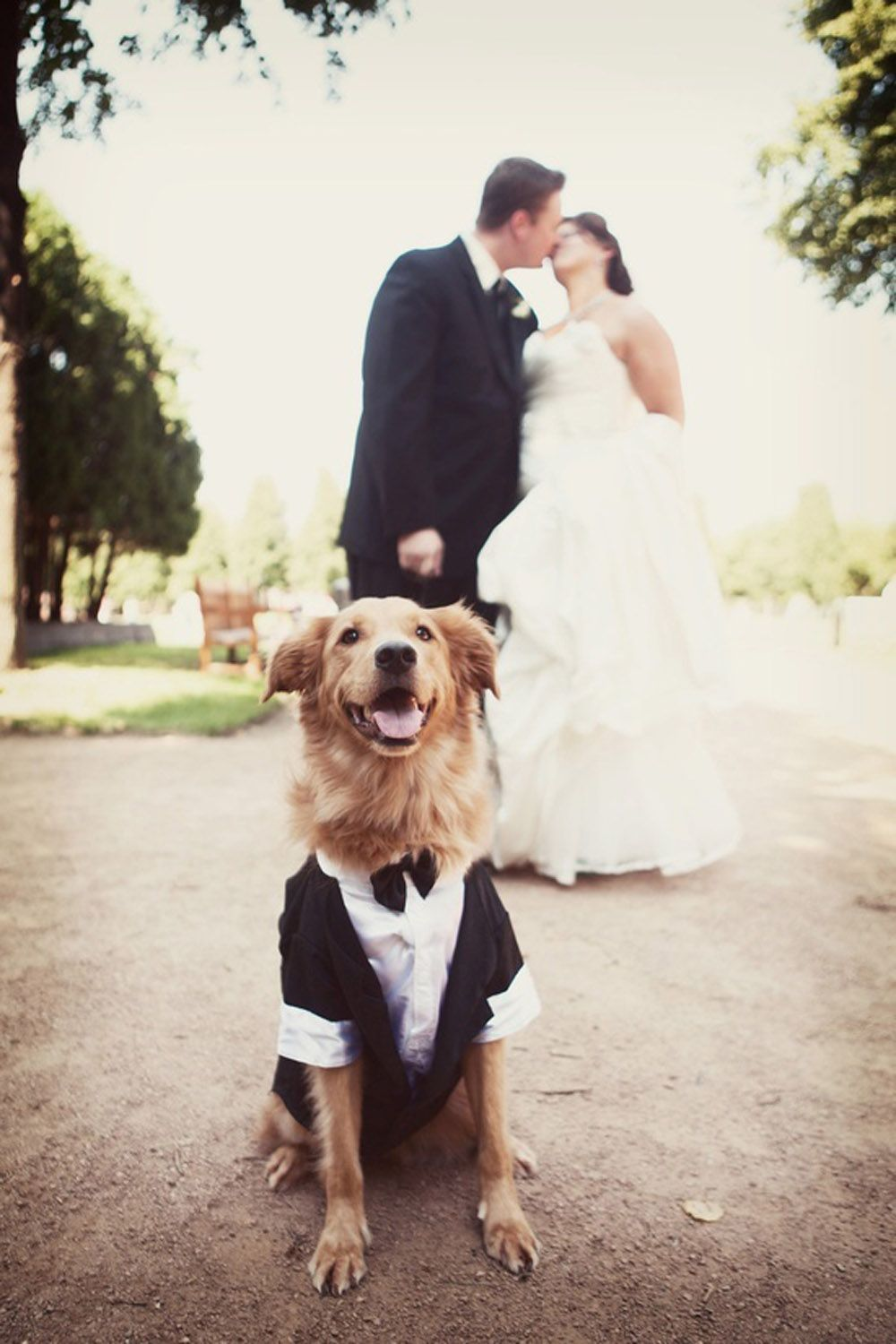 7 Quirky Ways to Include your Pets in your Wedding | Wedding ...