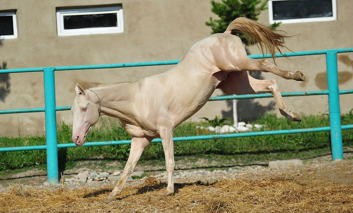 Hairless horse - iFunny :)   Animals, Horses, Deadly animals