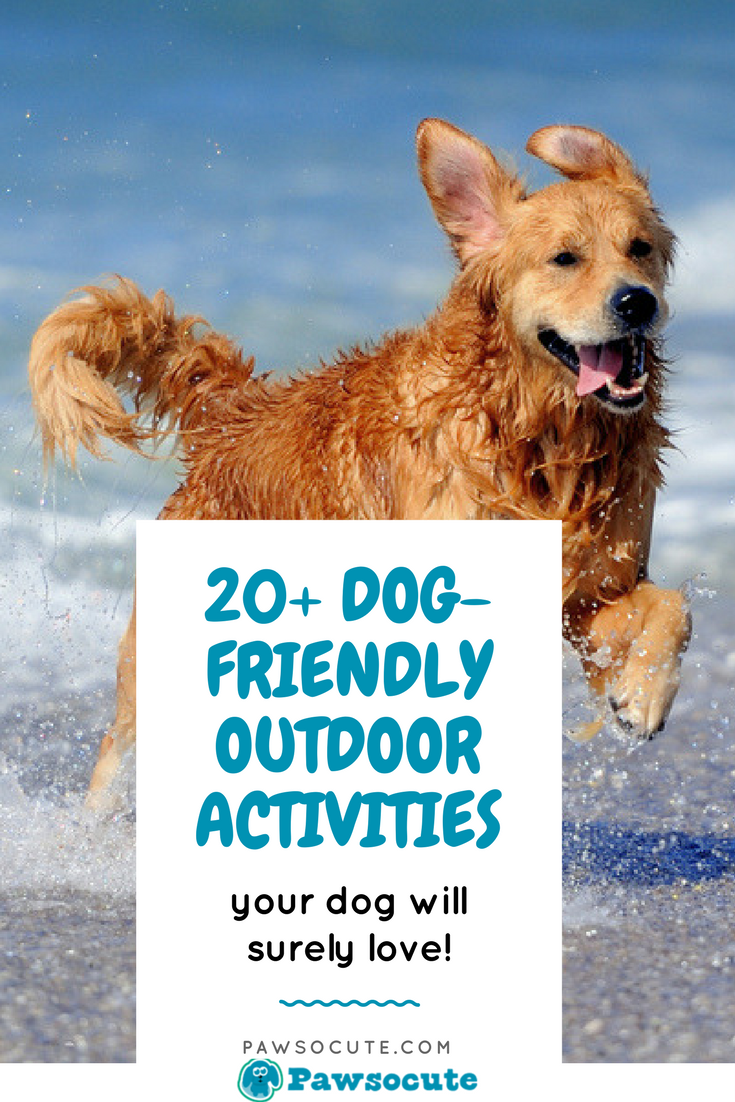 20 Dog Friendly Outdoor Activities For Dogs And Dog Owners To Enjoy With Images Dog Friends Dogs Dog Activities