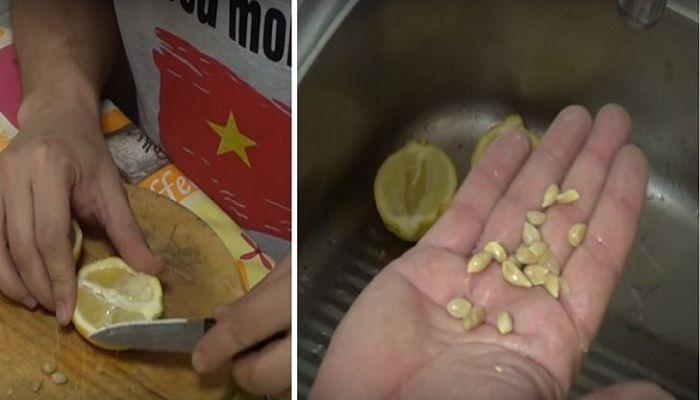 ZASADITE SVOJU SUPERVOĆKU: Evo kako da Vam limun izraste kod kuće –  PRIRODOM DO ZDRAVLJA