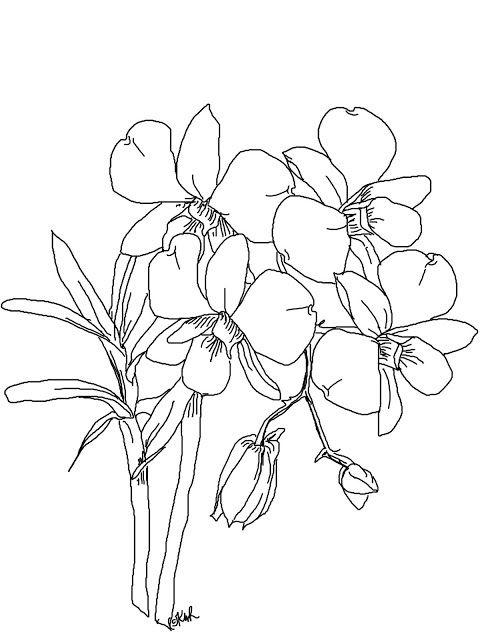 Free Digi Sketch Phalaenopsis Orchid With Images Adult