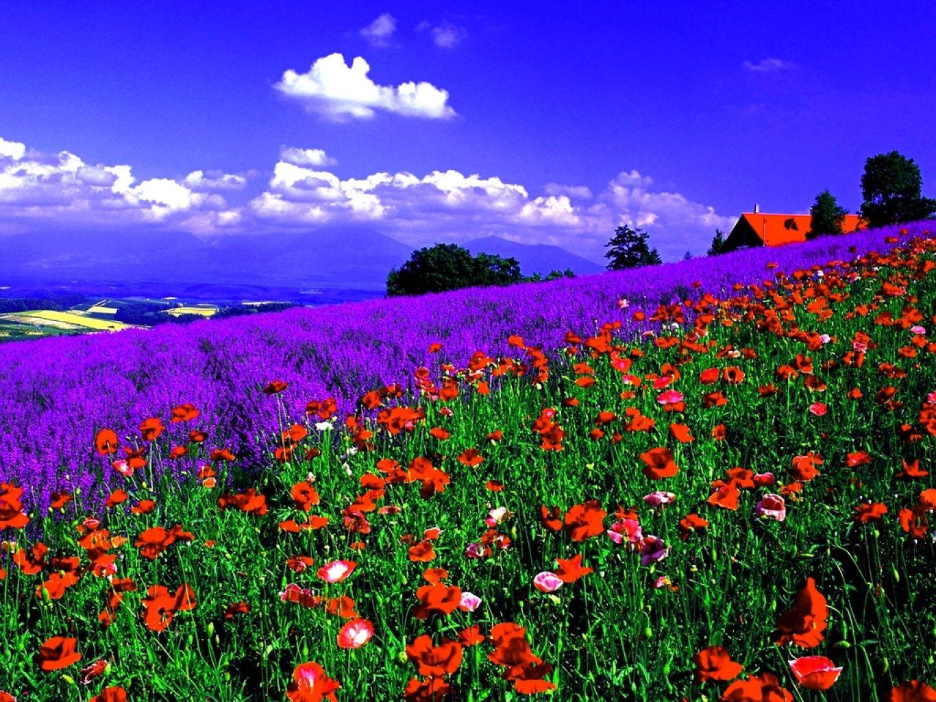 fondos de pantalla de flores de primavera