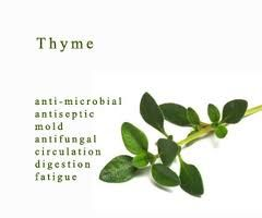 Thyme essential oil and its many uses