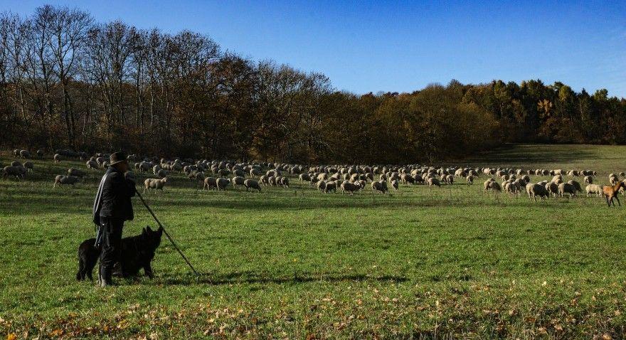 Pin Von Marion Auf Schafe Schafe