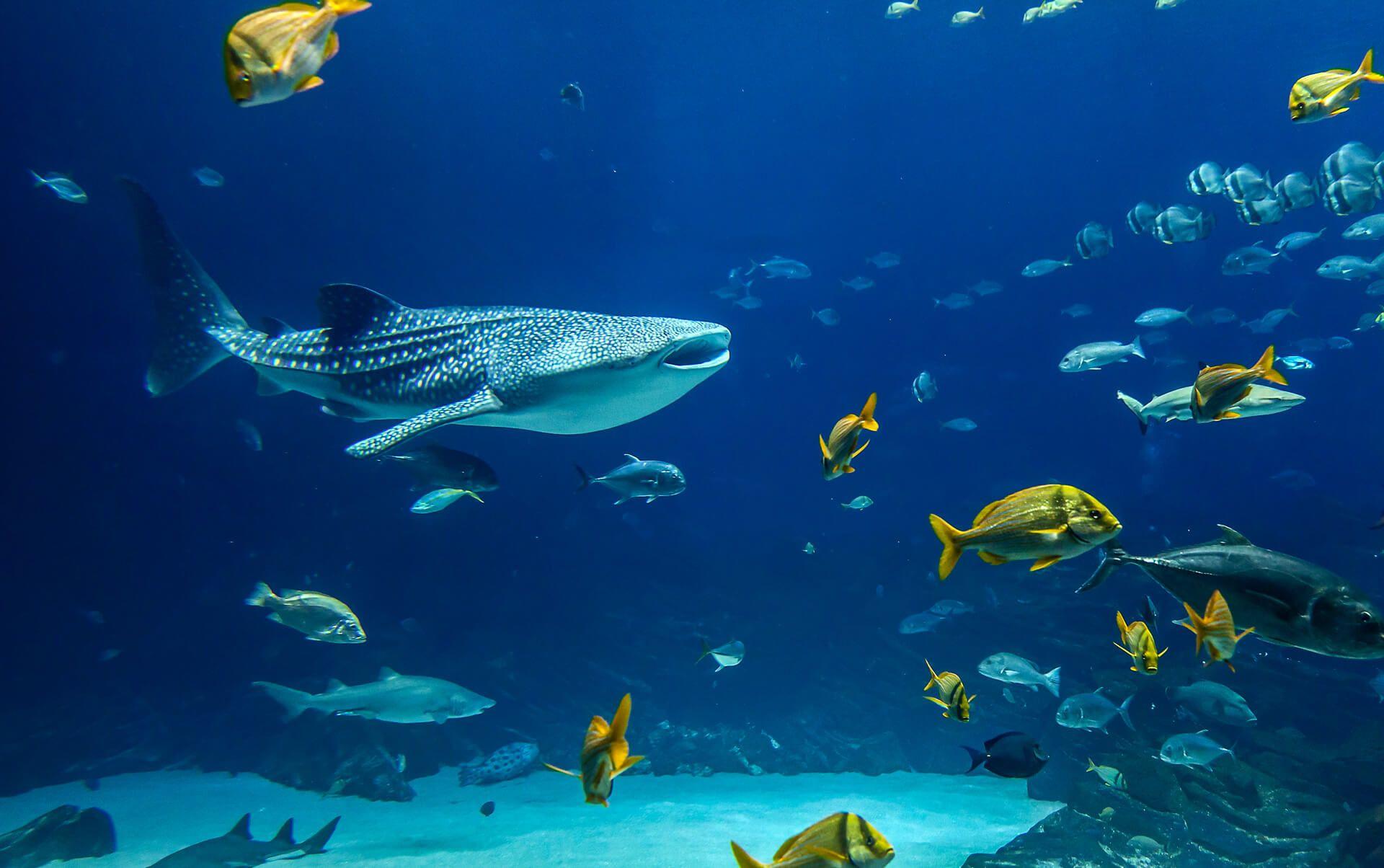 underwater ile ilgili görsel sonucu
