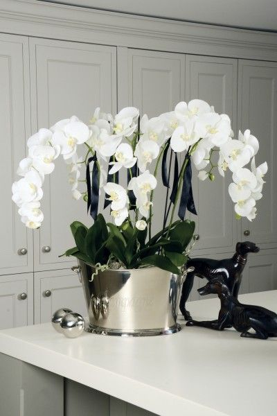 Orchid in a Large Champagne Cooler Plantas, Terrazas, Azoteas y