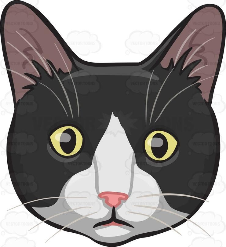 30+ Black White Cat Clipart