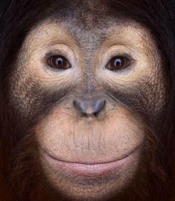 Incredible Studio Portraits Of Wild Animals By Brad Wilson: Wild Animals Photography, Animals Wild