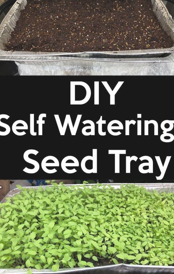 DIY Self-watering seed starting Tray,  Save money by making your own self-watering seed starting tray, it is very easy, it is cheap if you buy the items or free if you reuse the ones you have used. #diy #selfwateringtray #seedtray #seedsstarting #selfwatering #howto #startseeds #indoor Indoorgrow #gardentray #grow #garden #gardening