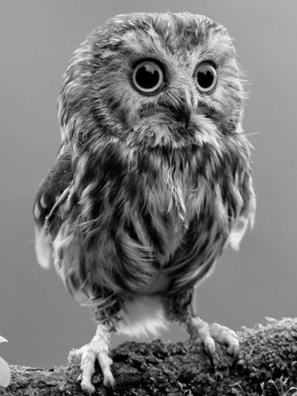 Kindle Fire Wallpapers Group 824 1200 Wallpapers For Kindle 37 Wallpapers Adorable Wallpapers Pet Birds Baby Owls Owl Pictures