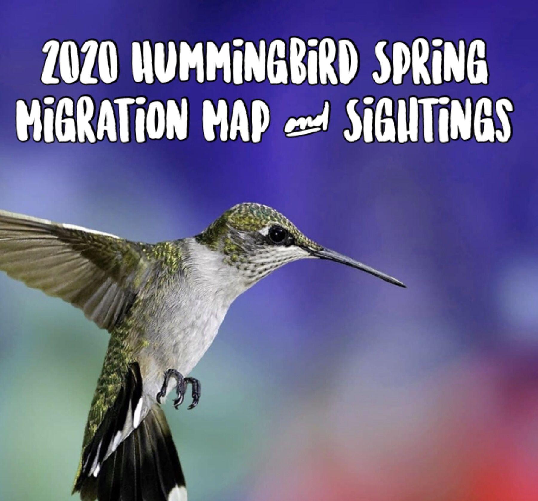 2020 Hummingbird Migration Map in 2020 Hummingbird