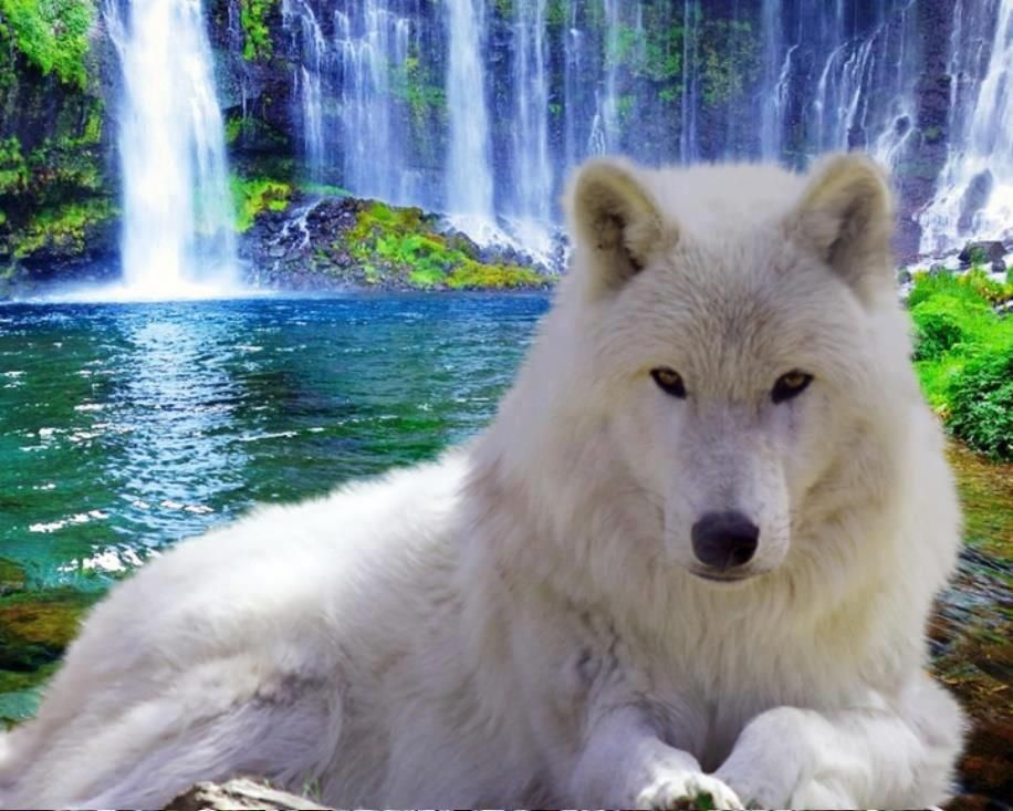 Épinglé par Caro♥Cocci sur Loups, renards, coyotes