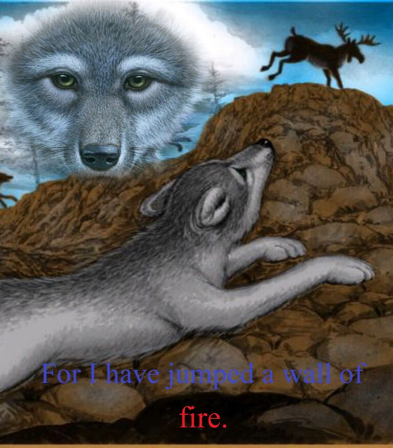 Wolves Of The Beyond Edit Fantasy Wolf Wolf Life Wolf